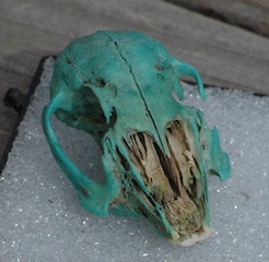 Malachite Rodent Scull